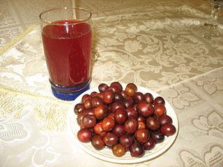 2012 Acura on Propiedades Antioxidantes Del Corozo O Uva De Lata   Plantasparacurar