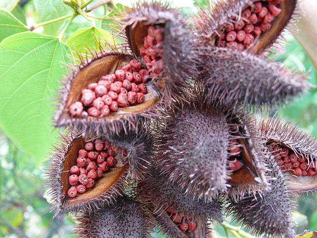 экзотические фрукты название фото
