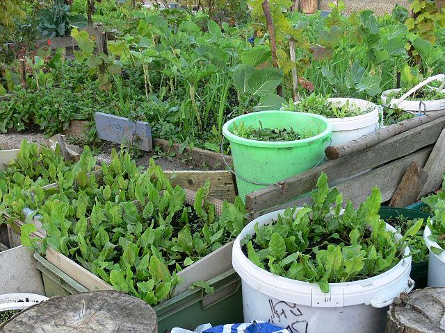 2 variedades de fertilizantes naturales for Como organizar mi jardin